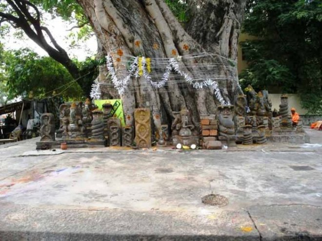 peepal-tree-marriage-hinduism